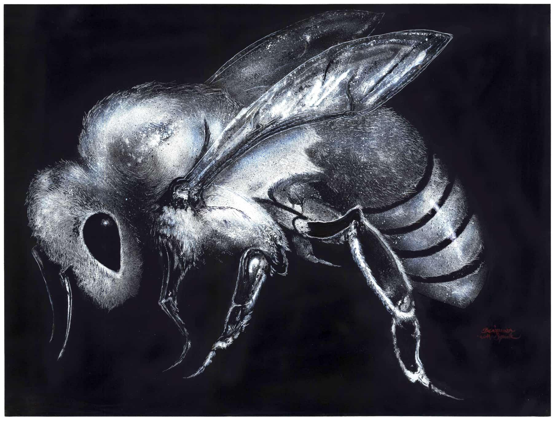 Bienen Universum kompri by Xin One