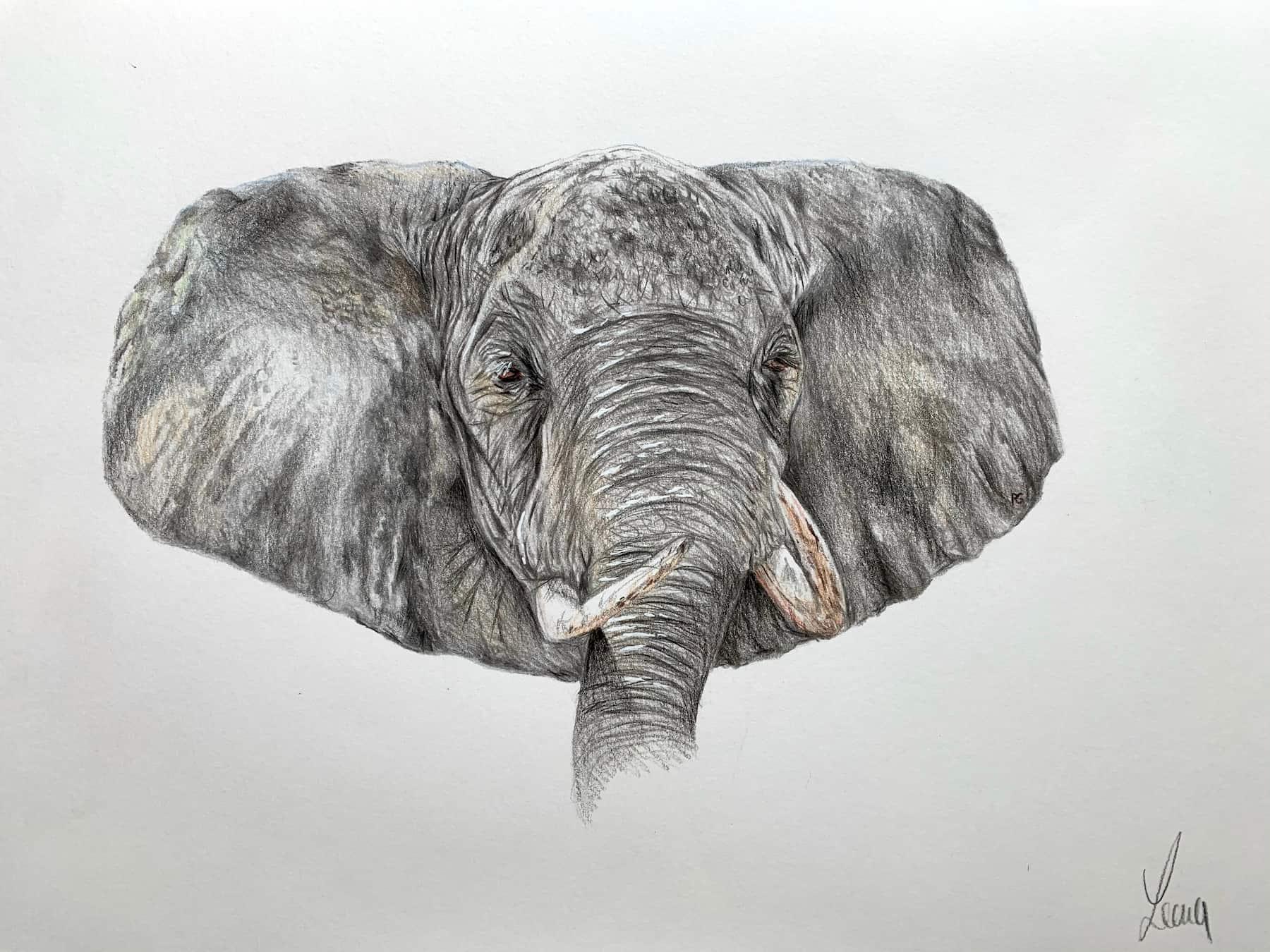 Elefant; 2020; A4; Buntstift auf Zeichenpapier