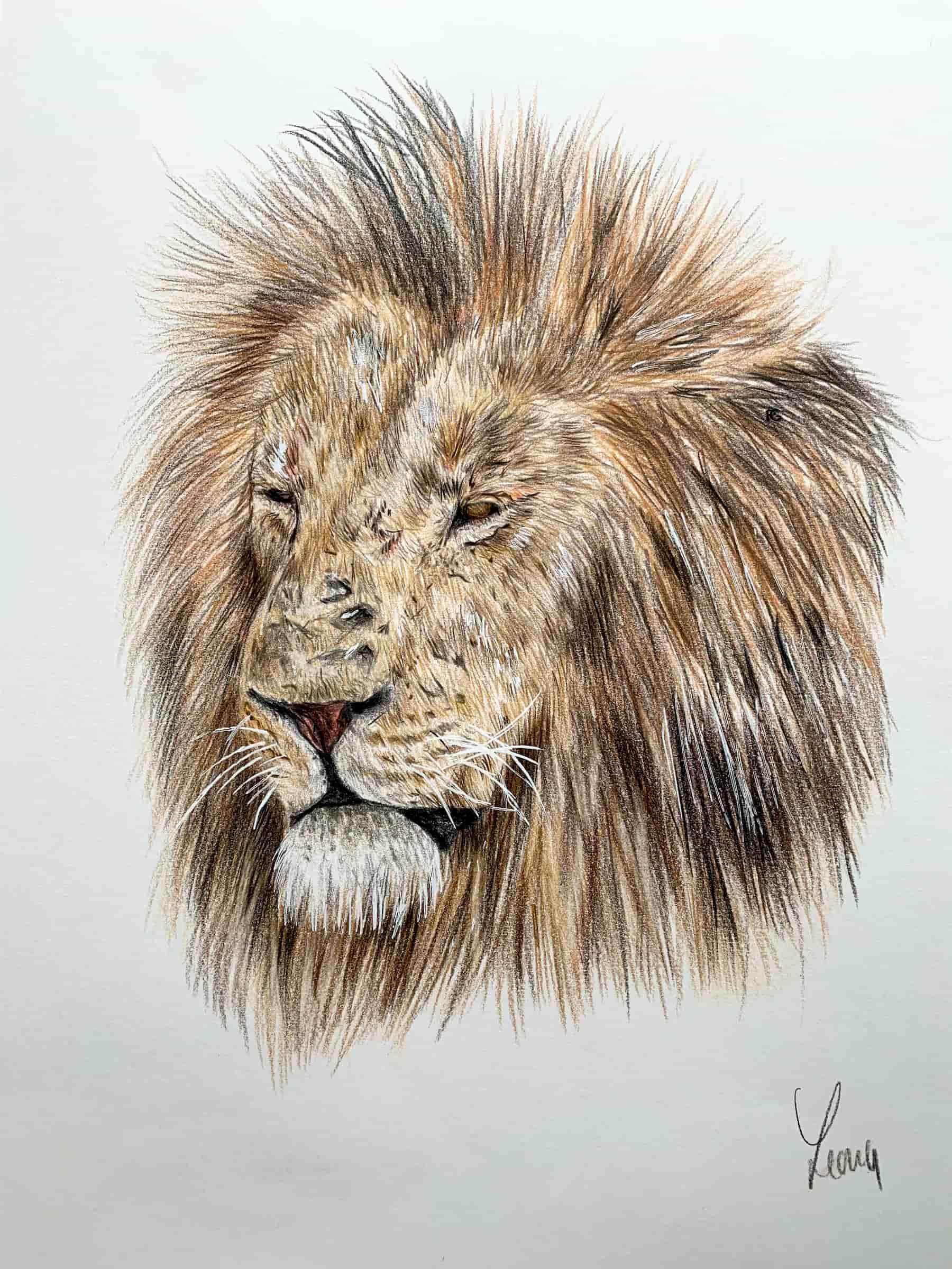 Löwe; 2020; A4; Buntstift auf Zeichenpapier