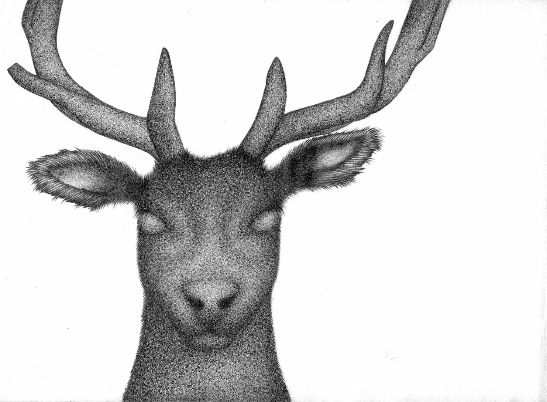 Der Hirsch - 21cm x 28,2cm - Bleistift auf Papier
