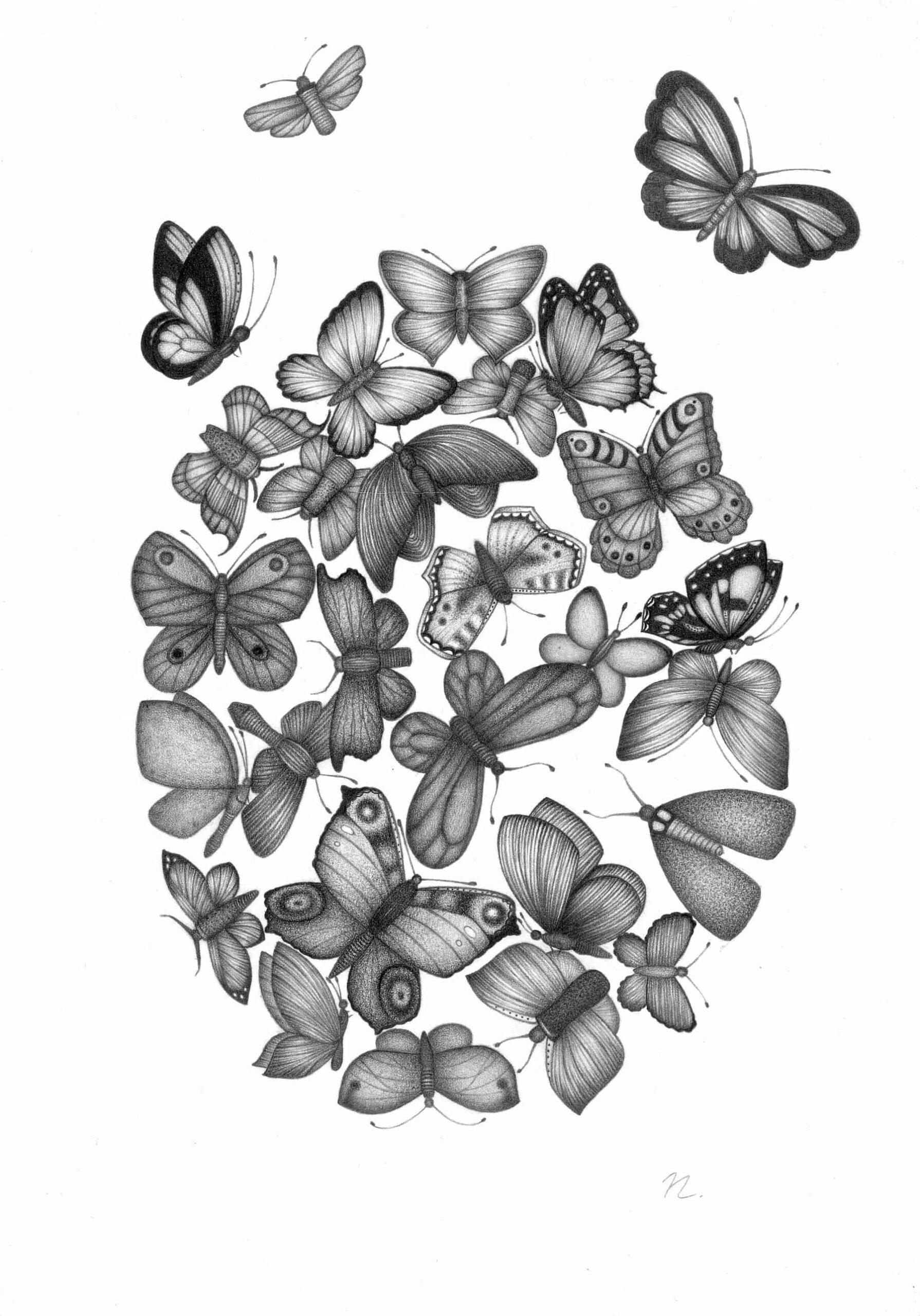 Schmetterlinge im Bauch - 21,0cm x 29,7cm - Bleistift auf Papier by nadin Wunderlich